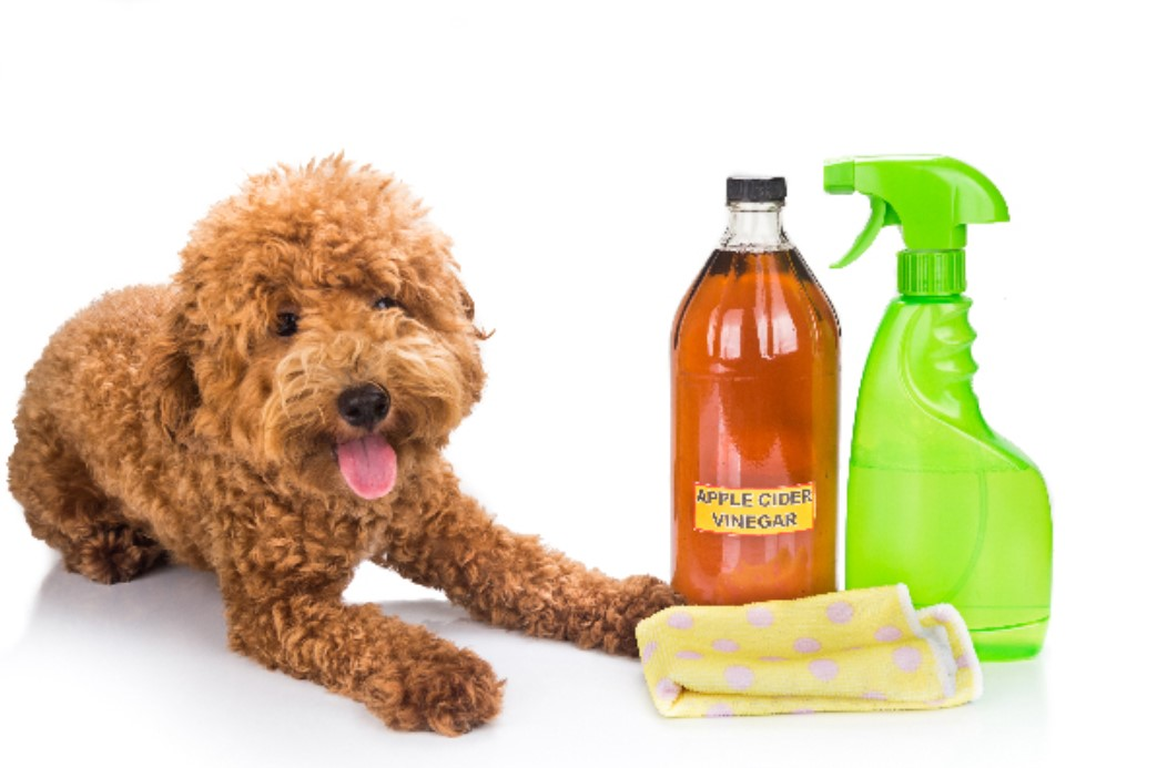 Clean Your Dog's Coat With Vinegar