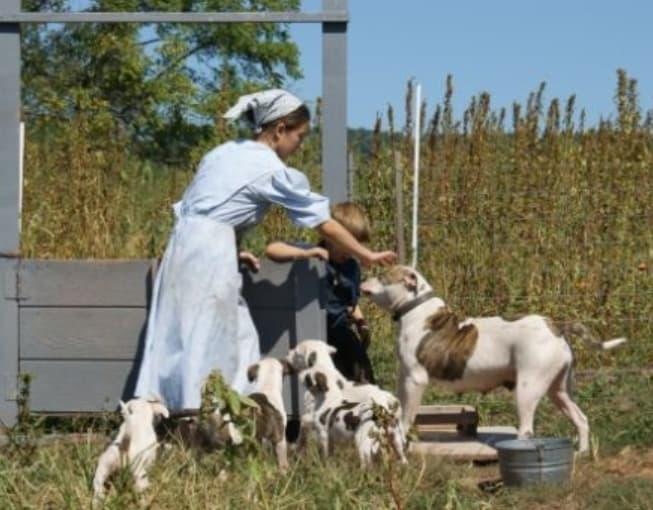 Dog Farming